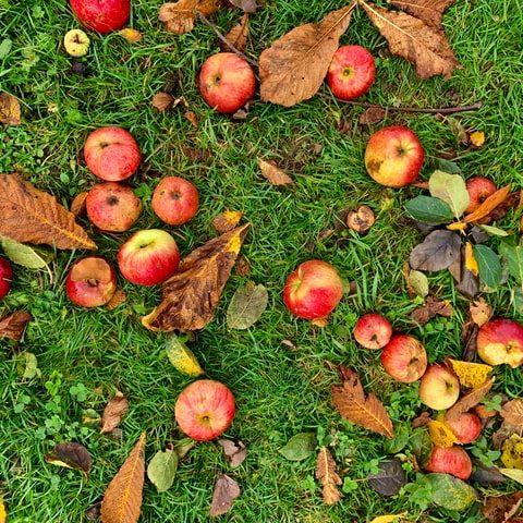 Gepofte appel met camembert en noten